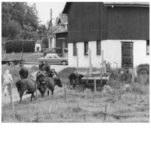 Agrarian and Rural History, Swedish University of Agricultural Sciences / Sweden